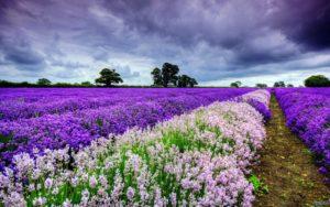 Најлепша места на свету – Поља лала – Холандија